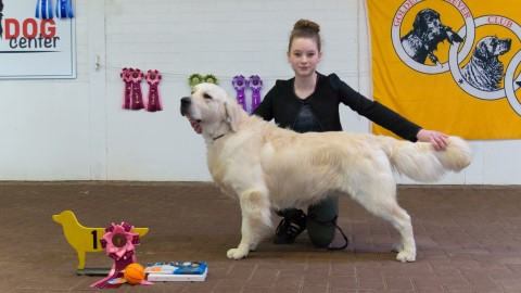 Junior Handler 11 17 jaar Custom 2